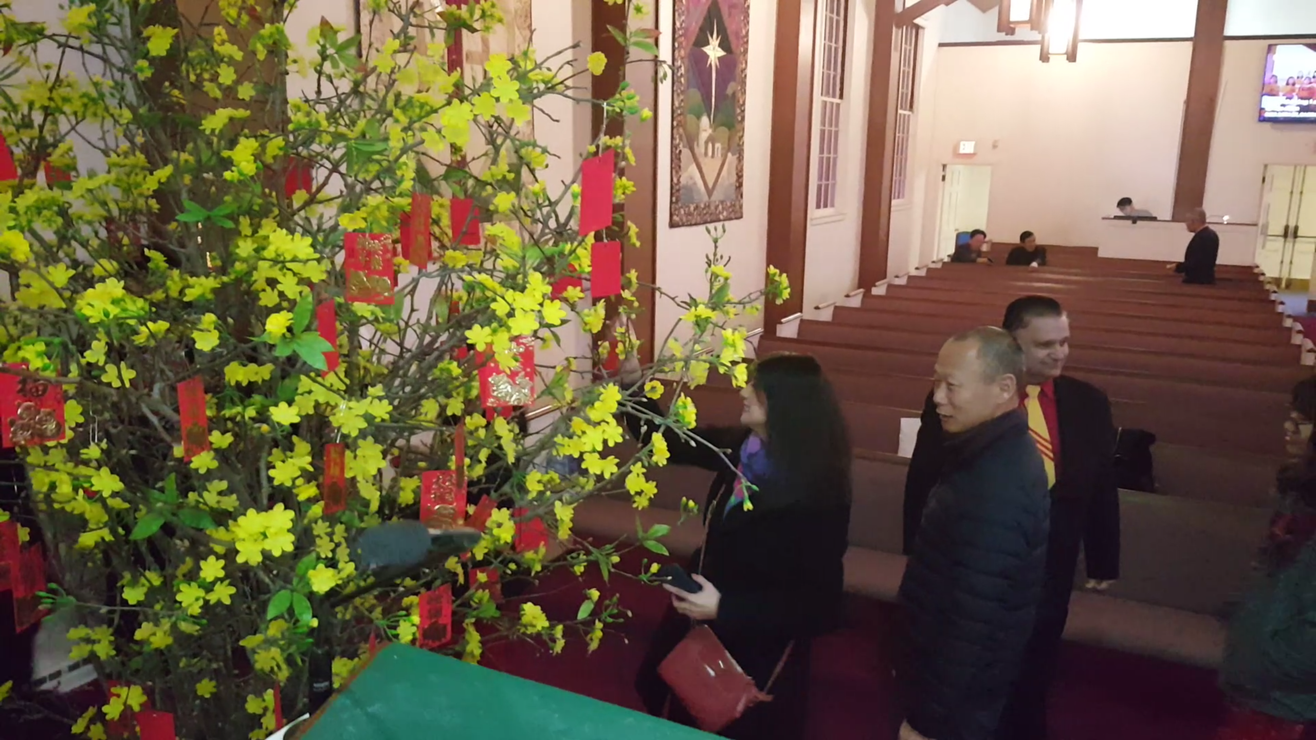 church li xi tree